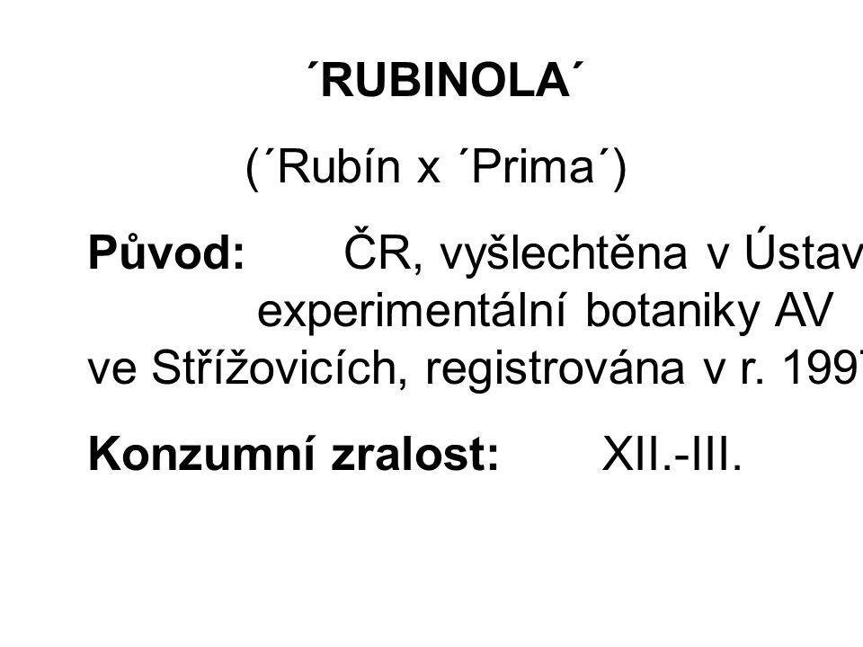 ´RUBINOLA´ (´Rubín x ´Prima´) Původ: ČR, vyšlechtěna v Ústavu experimentální botaniky AV ve Střížovicích, registrována v r.