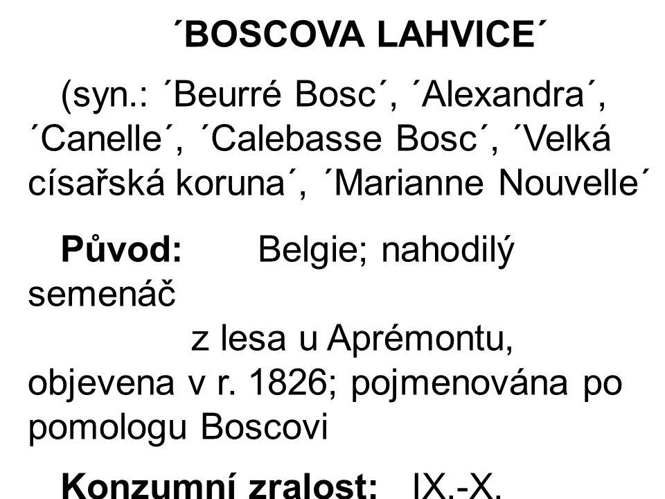 ´BOSCOVA LAHVICE´ (syn.: ´Beurré Bosc´, ´Alexandra´, ´Canelle´, ´Calebasse Bosc´, ´Velká císařská koruna´, ´Marianne Nouvelle´ Původ: Belgie; nahodilý semenáč z lesa u Aprémontu, objevena v r.