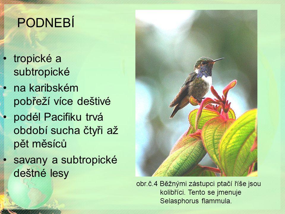 PODNEBÍ tropické a subtropické na karibském pobřeží více deštivé podél Pacifiku trvá období sucha čtyři až pět měsíců savany a subtropické deštné lesy obr.č.4 Běžnými zástupci ptačí říše jsou kolibříci.