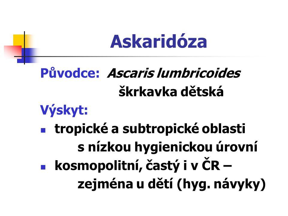 Askaridóza Původce: Ascaris lumbricoides škrkavka dětská Výskyt: tropické a subtropické oblasti s nízkou hygienickou úrovní kosmopolitní, častý i v ČR