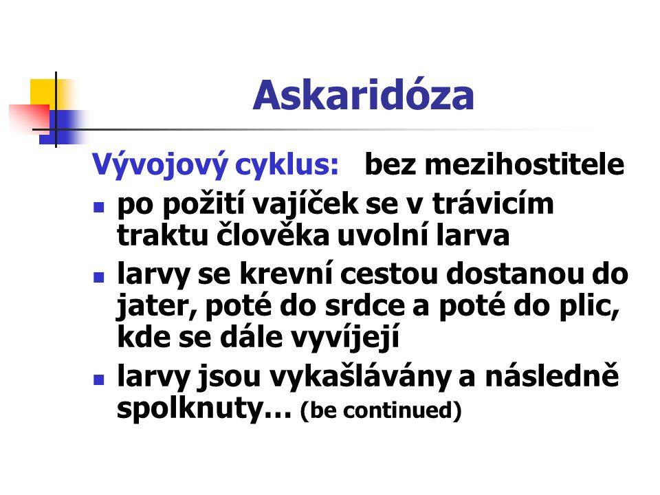 Askaridóza Vývojový cyklus: bez mezihostitele po požití vajíček se v trávicím traktu člověka uvolní larva larvy se krevní cestou dostanou do jater, po
