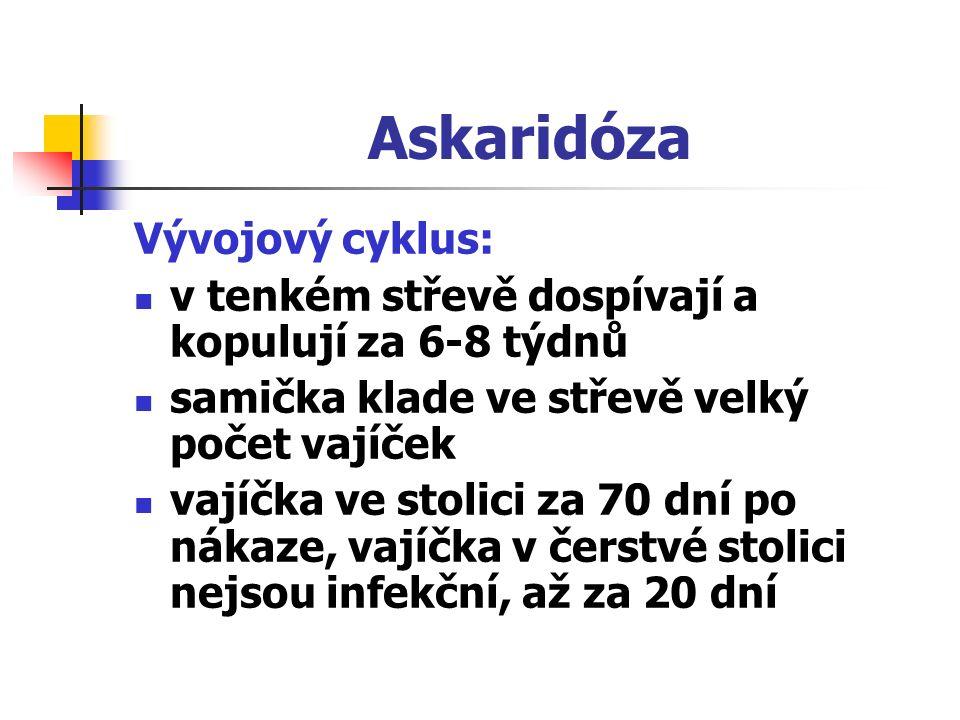 Askaridóza Vývojový cyklus: v tenkém střevě dospívají a kopulují za 6-8 týdnů samička klade ve střevě velký počet vajíček vajíčka ve stolici za 70 dní
