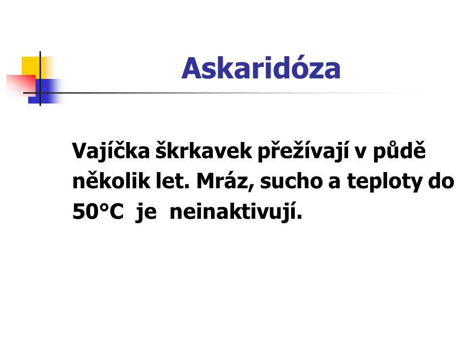 Askaridóza Vajíčka škrkavek přežívají v půdě několik let. Mráz, sucho a teploty do 50°C je neinaktivují.