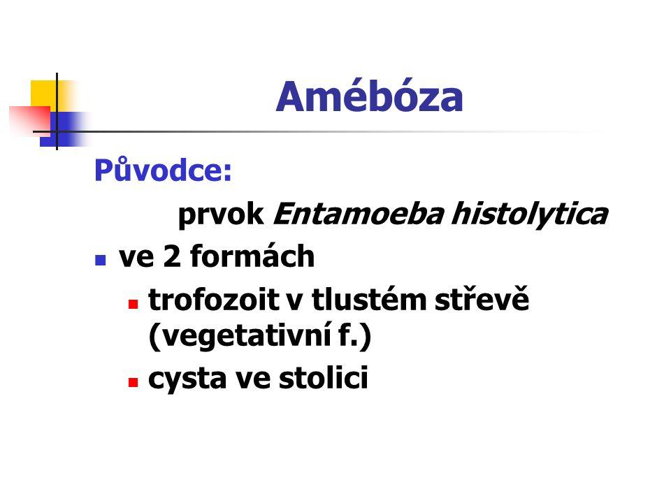 Amébóza Původce: prvok Entamoeba histolytica ve 2 formách trofozoit v tlustém střevě (vegetativní f.) cysta ve stolici