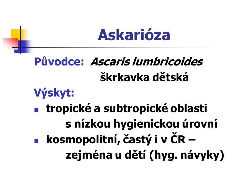 Askarióza Původce: Ascaris lumbricoides škrkavka dětská Výskyt: tropické a subtropické oblasti s nízkou hygienickou úrovní kosmopolitní, častý i v ČR