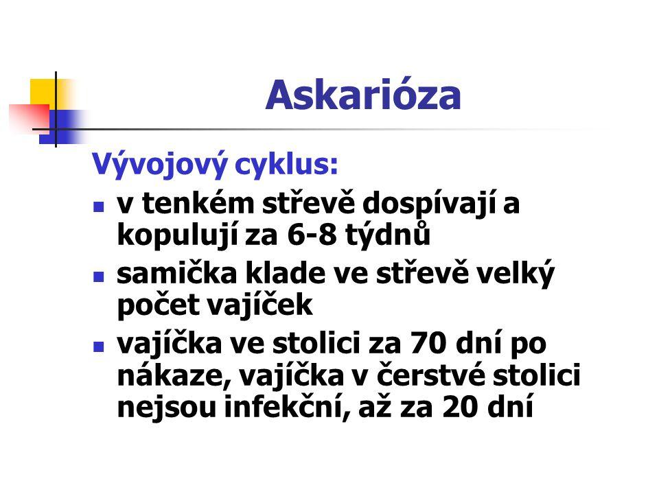 Askarióza Vývojový cyklus: v tenkém střevě dospívají a kopulují za 6-8 týdnů samička klade ve střevě velký počet vajíček vajíčka ve stolici za 70 dní po nákaze, vajíčka v čerstvé stolici nejsou infekční, až za 20 dní