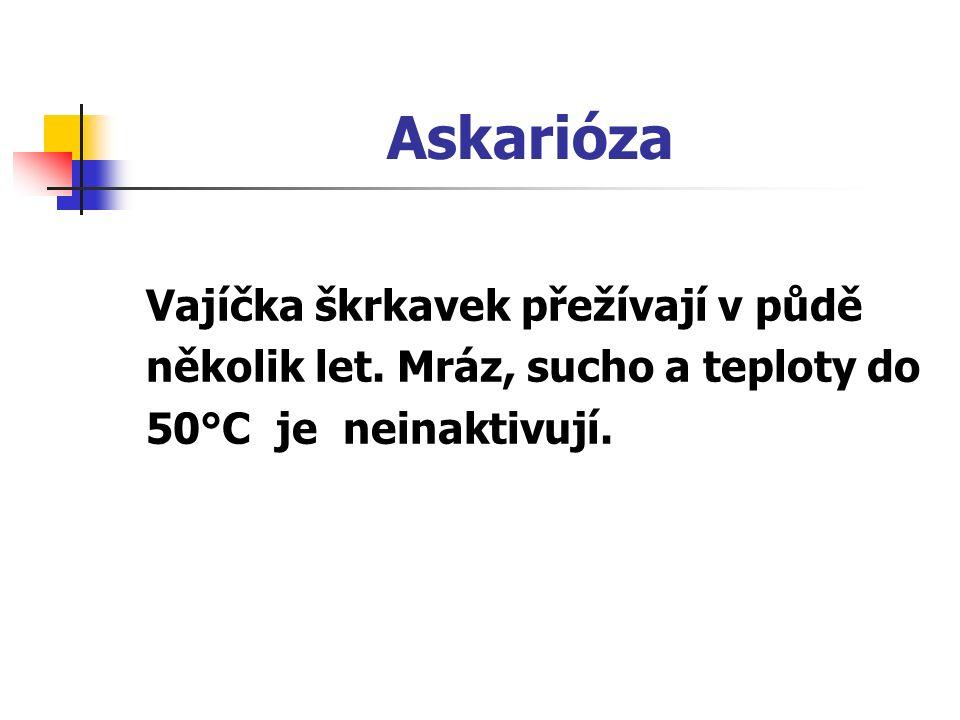 Askarióza Vajíčka škrkavek přežívají v půdě několik let. Mráz, sucho a teploty do 50°C je neinaktivují.