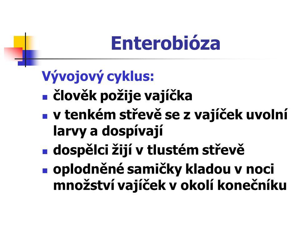 Enterobióza Vývojový cyklus: člověk požije vajíčka v tenkém střevě se z vajíček uvolní larvy a dospívají dospělci žijí v tlustém střevě oplodněné samičky kladou v noci množství vajíček v okolí konečníku