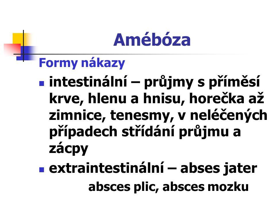 Amébóza Formy nákazy intestinální – průjmy s příměsí krve, hlenu a hnisu, horečka až zimnice, tenesmy, v neléčených případech střídání průjmu a zácpy extraintestinální – abses jater absces plic, absces mozku