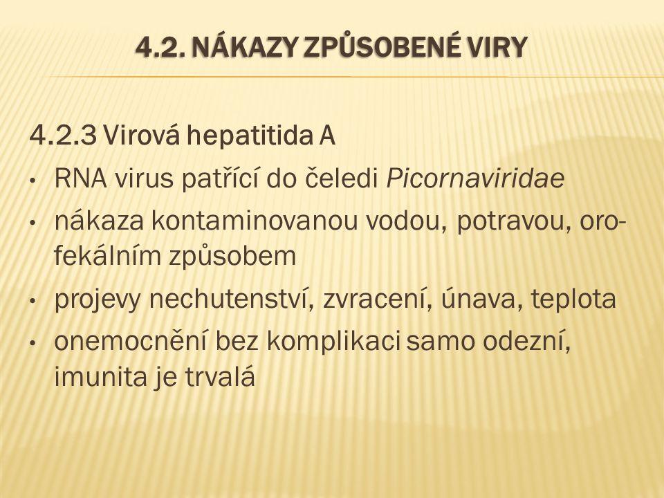 4.2. NÁKAZY ZPŮSOBENÉ VIRY 4.2.3 Virová hepatitida A RNA virus patřící do čeledi Picornaviridae nákaza kontaminovanou vodou, potravou, oro- fekálním z