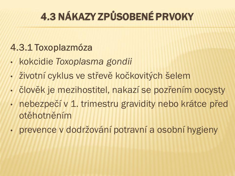 4.3 NÁKAZY ZPŮSOBENÉ PRVOKY 4.3.1 Toxoplazmóza kokcidie Toxoplasma gondii životní cyklus ve střevě kočkovitých šelem člověk je mezihostitel, nakazí se pozřením oocysty nebezpečí v 1.