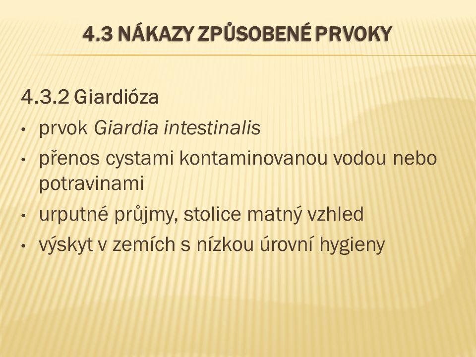 4.3 NÁKAZY ZPŮSOBENÉ PRVOKY 4.3.2 Giardióza prvok Giardia intestinalis přenos cystami kontaminovanou vodou nebo potravinami urputné průjmy, stolice matný vzhled výskyt v zemích s nízkou úrovní hygieny