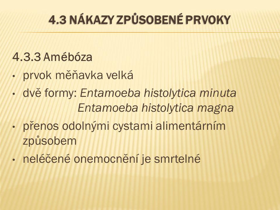 4.3 NÁKAZY ZPŮSOBENÉ PRVOKY 4.3.3 Amébóza prvok měňavka velká dvě formy: Entamoeba histolytica minuta Entamoeba histolytica magna přenos odolnými cystami alimentárním způsobem neléčené onemocnění je smrtelné