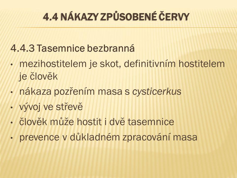 4.4 NÁKAZY ZPŮSOBENÉ ČERVY 4.4.3 Tasemnice bezbranná mezihostitelem je skot, definitivním hostitelem je člověk nákaza pozřením masa s cysticerkus vývo