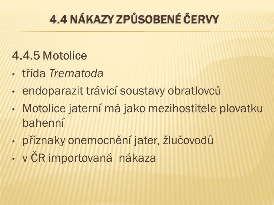4.4 NÁKAZY ZPŮSOBENÉ ČERVY 4.4.5 Motolice třída Trematoda endoparazit trávicí soustavy obratlovců Motolice jaterní má jako mezihostitele plovatku bahe