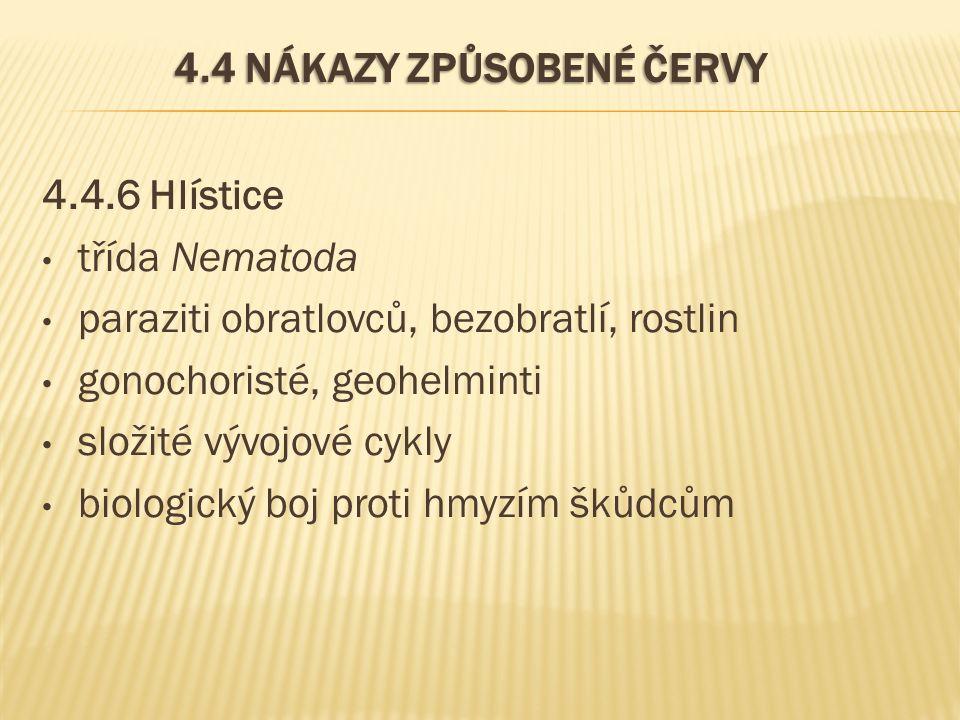 4.4 NÁKAZY ZPŮSOBENÉ ČERVY 4.4.6 Hlístice třída Nematoda paraziti obratlovců, bezobratlí, rostlin gonochoristé, geohelminti složité vývojové cykly bio