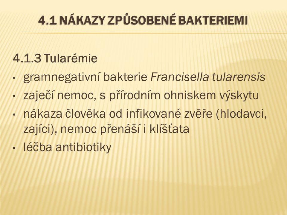 4.1 NÁKAZY ZPŮSOBENÉ BAKTERIEMI 4.1.3 Tularémie gramnegativní bakterie Francisella tularensis zaječí nemoc, s přírodním ohniskem výskytu nákaza člověka od infikované zvěře (hlodavci, zajíci), nemoc přenáší i klíšťata léčba antibiotiky