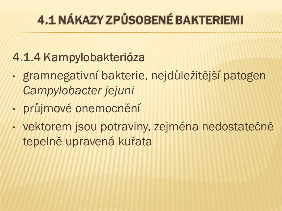4.1 NÁKAZY ZPŮSOBENÉ BAKTERIEMI 4.1.4 Kampylobakterióza gramnegativní bakterie, nejdůležitější patogen Campylobacter jejuni průjmové onemocnění vektorem jsou potraviny, zejména nedostatečně tepelně upravená kuřata