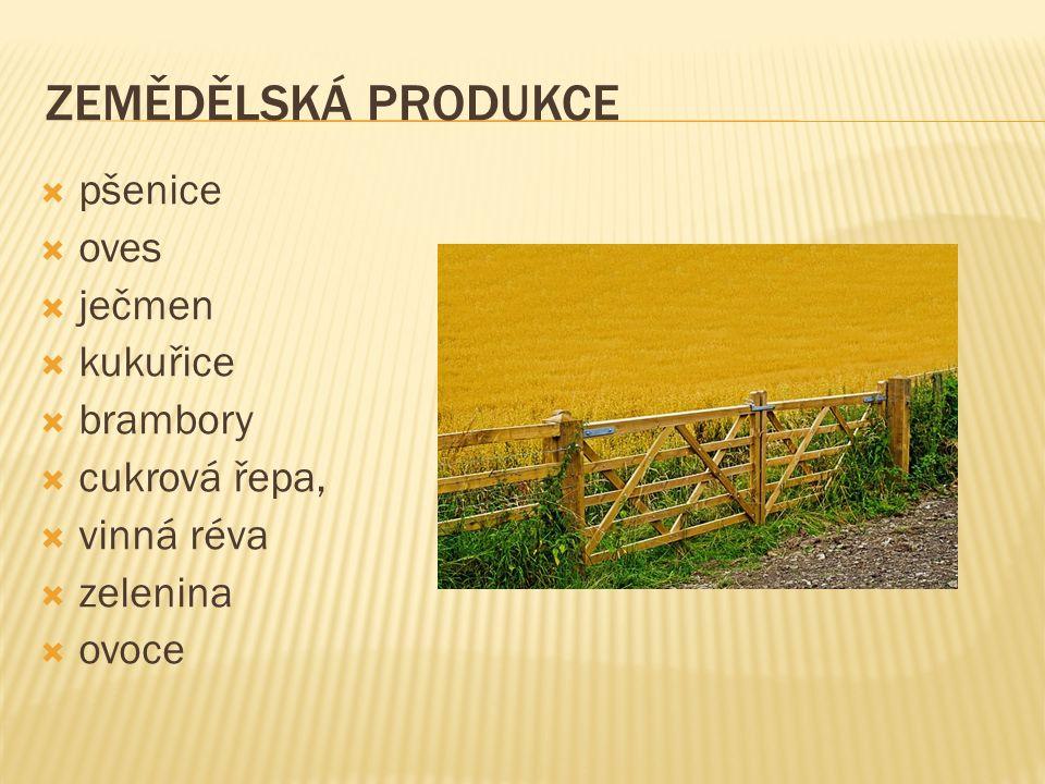 ZEMĚDĚLSKÁ PRODUKCE  pšenice  oves  ječmen  kukuřice  brambory  cukrová řepa,  vinná réva  zelenina  ovoce