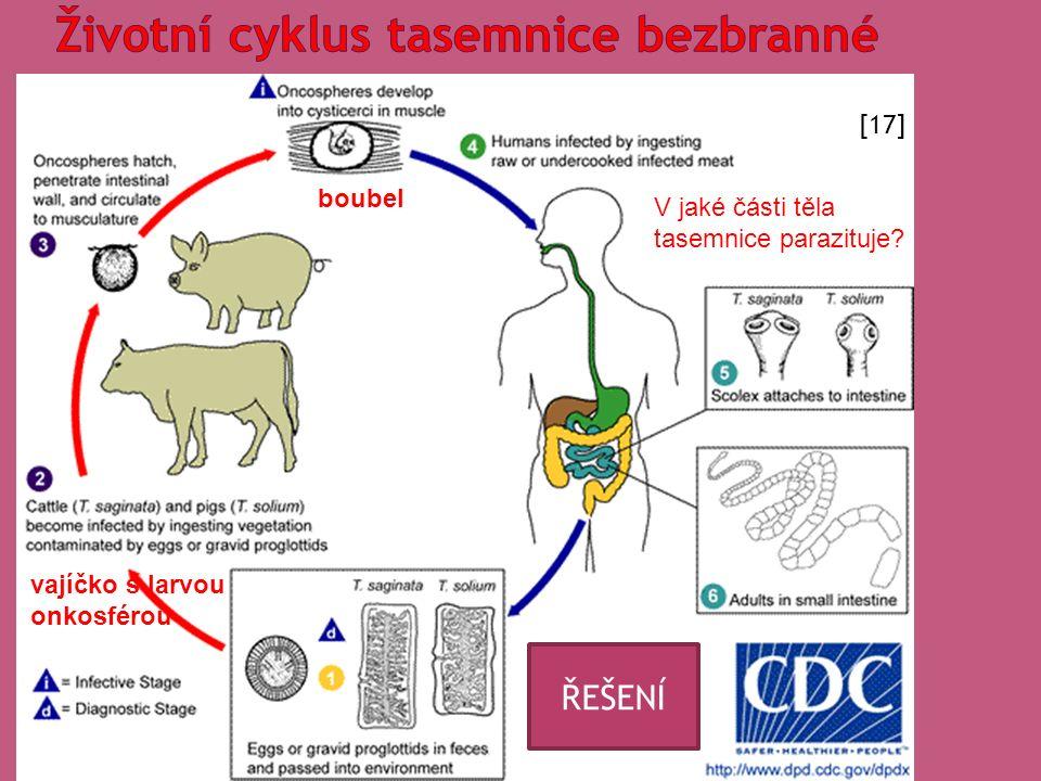 vajíčko s larvou onkosférou boubel V jaké části těla tasemnice parazituje.