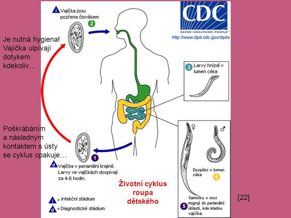 Životní cyklus roupa dětského Je nutná hygiena! Vajíčka ulpívají dotykem kdekoliv… Poškrábáním a následným kontaktem s ústy se cyklus opakuje… [22]