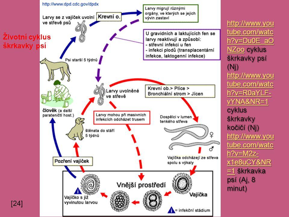 Životní cyklus škrkavky psí http://www.you tube.com/watc h?v=Du0E_aO NZoohttp://www.you tube.com/watc h?v=Du0E_aO NZoo cyklus škrkavky psí (Nj) http://www.you tube.com/watc h?v=Du0E_aO NZoo http://www.you tube.com/watc h?v=R0aYLF- vYNA&NR=1 http://www.you tube.com/watc h?v=R0aYLF- vYNA&NR=1 cyklus škrkavky kočičí (Nj) http://www.you tube.com/watc h?v=R0aYLF- vYNA&NR=1 http://www.you tube.com/watc h?v=M2z- x1e8uCY&NR =1http://www.you tube.com/watc h?v=M2z- x1e8uCY&NR =1 škrkavka psí (Aj, 8 minut) http://www.you tube.com/watc h?v=M2z- x1e8uCY&NR =1 [24]