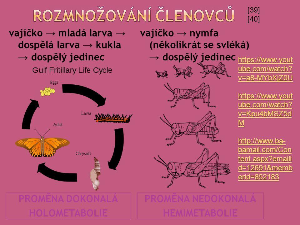 PROMĚNA DOKONALÁ HOLOMETABOLIE PROMĚNA NEDOKONALÁ HEMIMETABOLIE vajíčko → mladá larva → dospělá larva → kukla → dospělý jedinec vajíčko → nymfa (někol