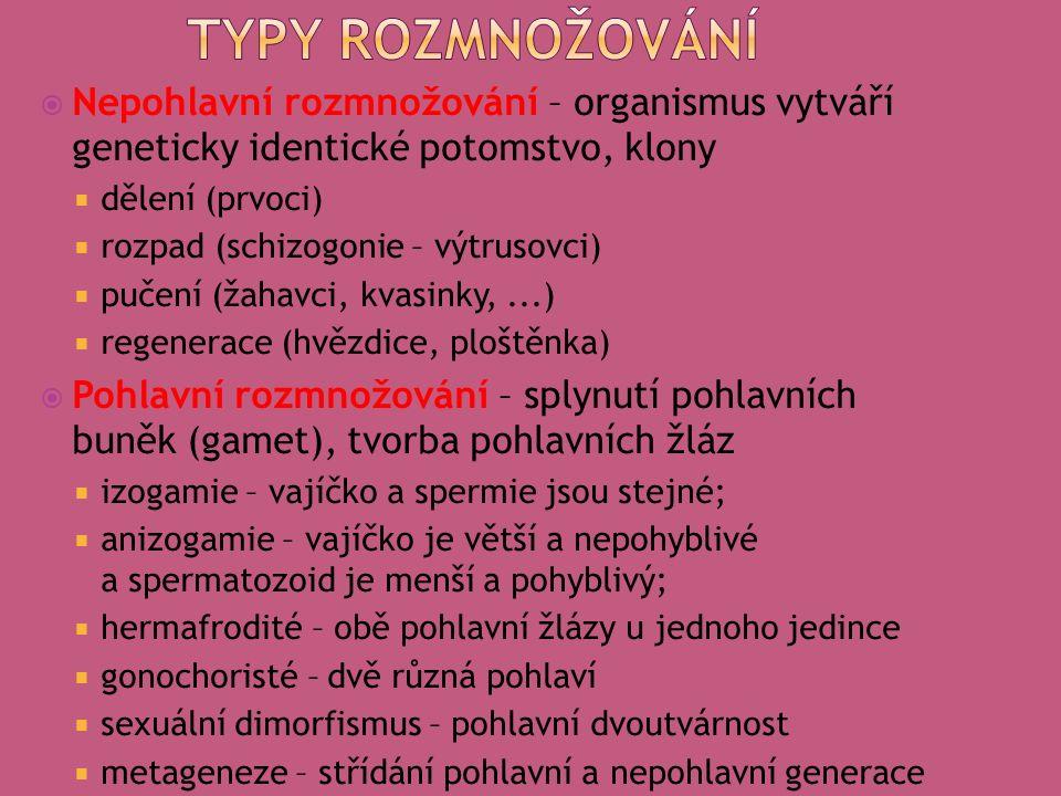  Nepohlavní rozmnožování – organismus vytváří geneticky identické potomstvo, klony  dělení (prvoci)  rozpad (schizogonie – výtrusovci)  pučení (žahavci, kvasinky,...)  regenerace (hvězdice, ploštěnka)  Pohlavní rozmnožování – splynutí pohlavních buněk (gamet), tvorba pohlavních žláz  izogamie – vajíčko a spermie jsou stejné;  anizogamie – vajíčko je větší a nepohyblivé a spermatozoid je menší a pohyblivý;  hermafrodité – obě pohlavní žlázy u jednoho jedince  gonochoristé – dvě různá pohlaví  sexuální dimorfismus – pohlavní dvoutvárnost  metageneze – střídání pohlavní a nepohlavní generace