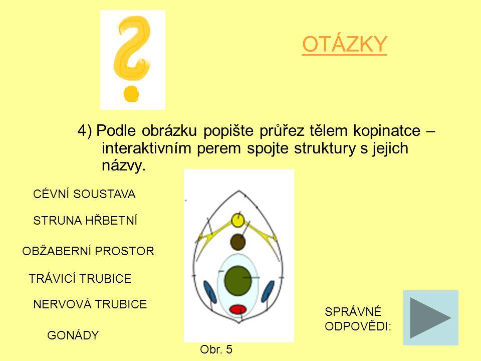 OTÁZKY 4) Podle obrázku popište průřez tělem kopinatce – interaktivním perem spojte struktury s jejich názvy.