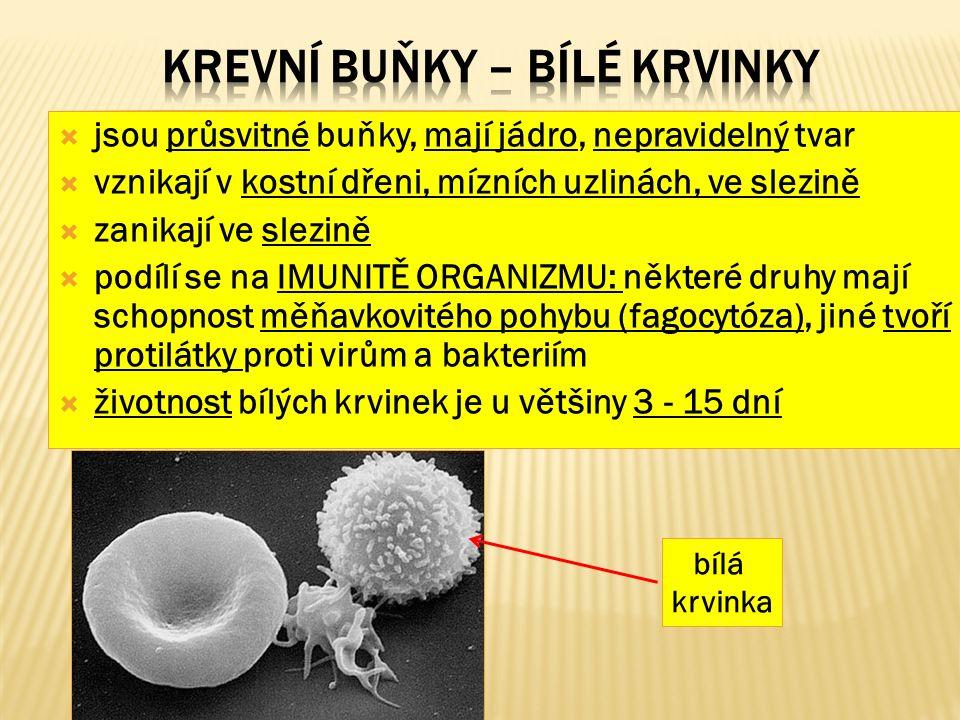  jsou průsvitné buňky, mají jádro, nepravidelný tvar  vznikají v kostní dřeni, mízních uzlinách, ve slezině  zanikají ve slezině  podílí se na IMUNITĚ ORGANIZMU: některé druhy mají schopnost měňavkovitého pohybu (fagocytóza), jiné tvoří protilátky proti virům a bakteriím  životnost bílých krvinek je u většiny 3 - 15 dní bílá krvinka