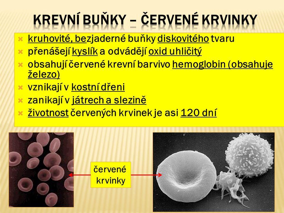  kruhovité, bezjaderné buňky diskovitého tvaru  přenášejí kyslík a odvádějí oxid uhličitý  obsahují červené krevní barvivo hemoglobin (obsahuje železo)  vznikají v kostní dřeni  zanikají v játrech a slezině  životnost červených krvinek je asi 120 dní červené krvinky