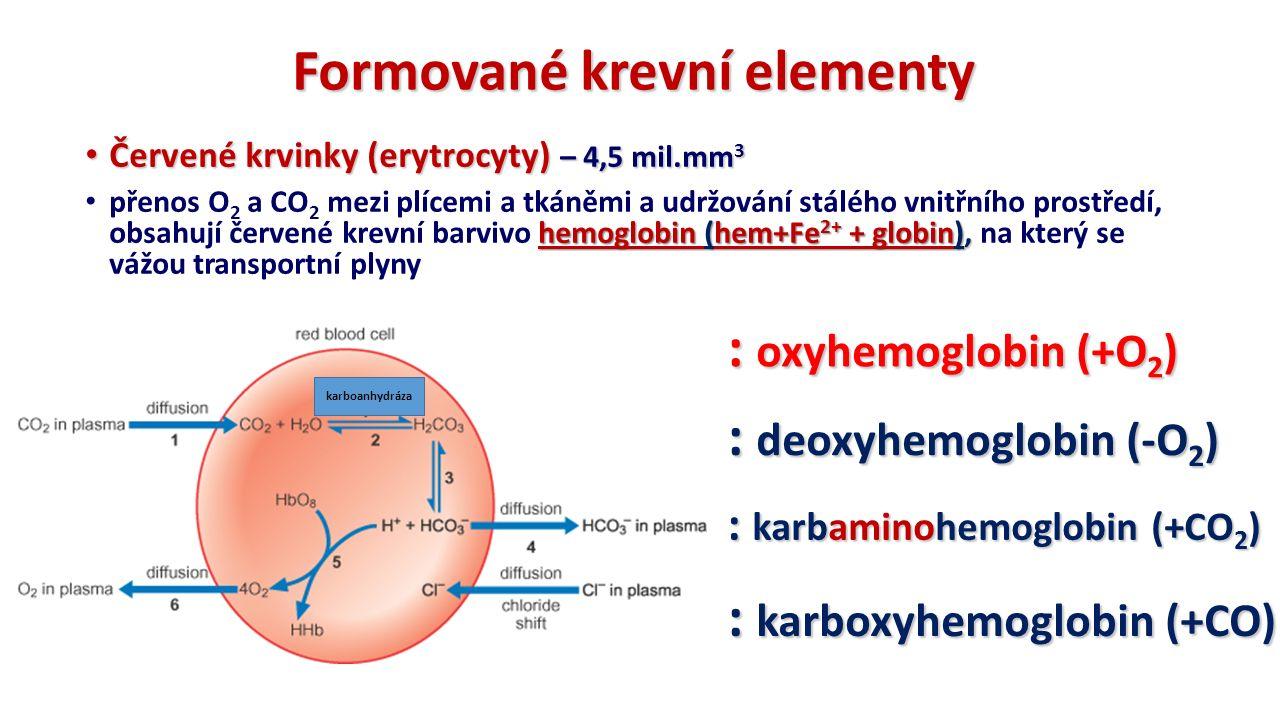Formované krevní elementy Červené krvinky (erytrocyty) – 4,5 mil.mm 3 Červené krvinky (erytrocyty) – 4,5 mil.mm 3 hemoglobin (hem+Fe 2+ + globin), přenos O 2 a CO 2 mezi plícemi a tkáněmi a udržování stálého vnitřního prostředí, obsahují červené krevní barvivo hemoglobin (hem+Fe 2+ + globin), na který se vážou transportní plyny : karboxyhemoglobin (+CO) : oxyhemoglobin (+O 2 ) : deoxyhemoglobin (-O 2 ) : karbaminohemoglobin (+CO 2 ) karboanhydráza