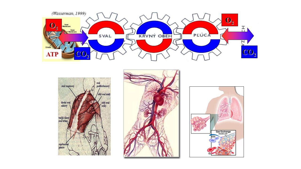 (Wasserman, 1999) ATP O2O2O2O2 O2O2O2O2 CO 2