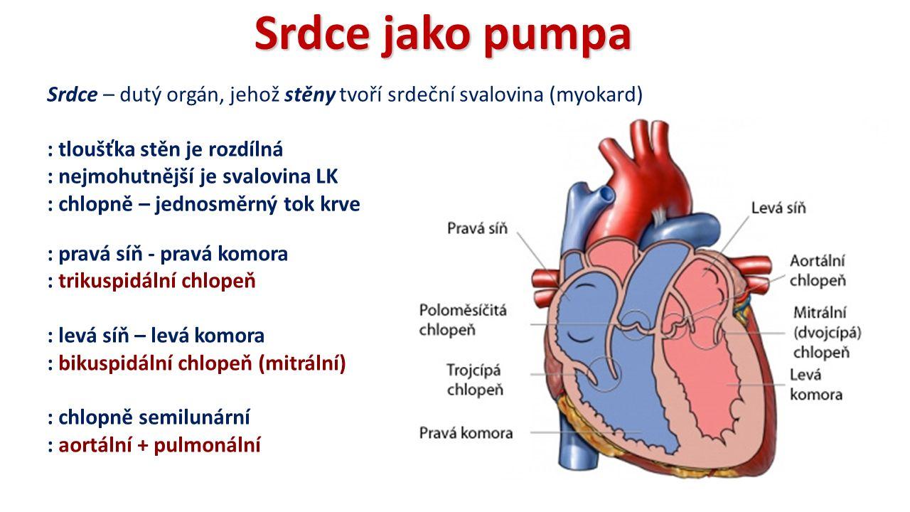 Srdce jako pumpa Srdce – dutý orgán, jehož stěny tvoří srdeční svalovina (myokard) : tloušťka stěn je rozdílná : nejmohutnější je svalovina LK : chlopně – jednosměrný tok krve : pravá síň - pravá komora : trikuspidální chlopeň : levá síň – levá komora : bikuspidální chlopeň (mitrální) : chlopně semilunární : aortální + pulmonální