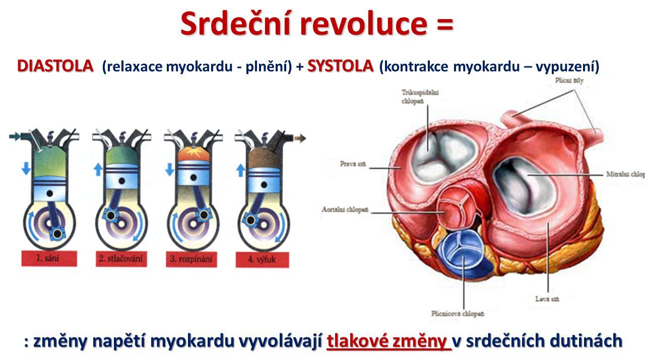 DIASTOLASYSTOLA DIASTOLA (relaxace myokardu - plnění) + SYSTOLA (kontrakce myokardu – vypuzení) Srdeční revoluce = : změny napětí myokardu vyvolávají