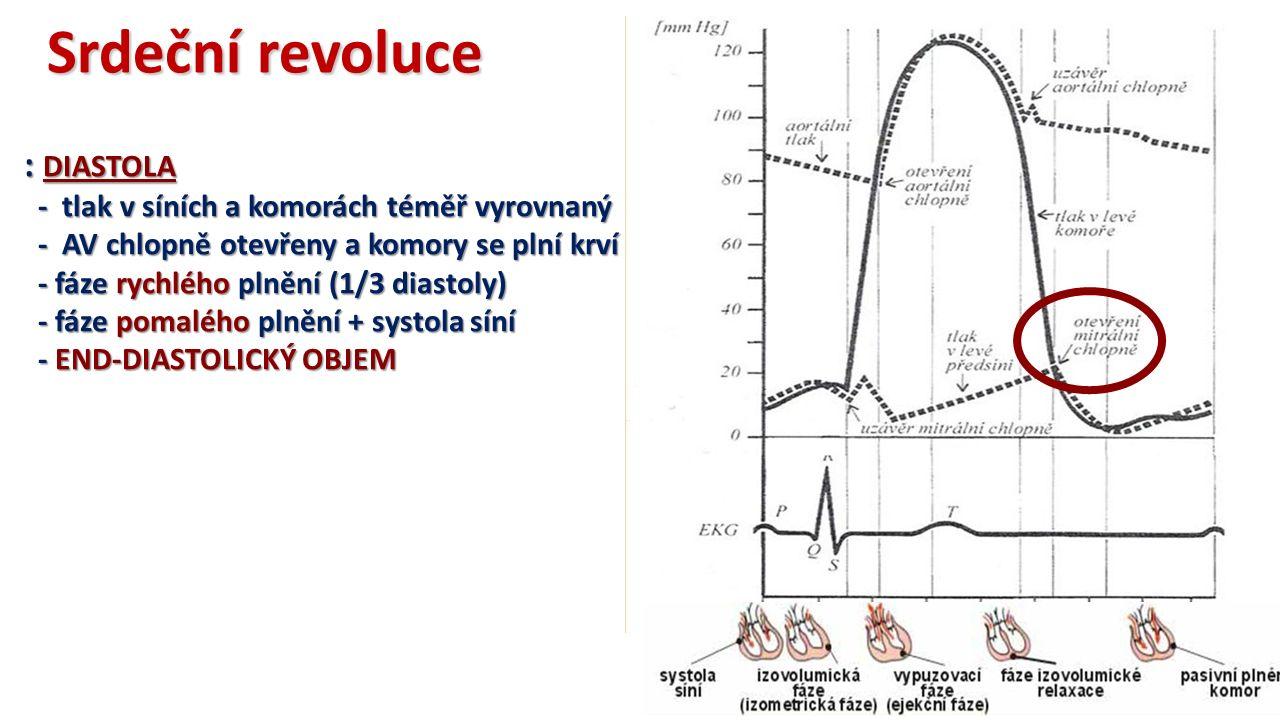 Srdeční revoluce : DIASTOLA - tlak v síních a komorách téměř vyrovnaný - tlak v síních a komorách téměř vyrovnaný - AV chlopně otevřeny a komory se plní krví - AV chlopně otevřeny a komory se plní krví - fáze rychlého plnění (1/3 diastoly) - fáze rychlého plnění (1/3 diastoly) - fáze pomalého plnění + systola síní - fáze pomalého plnění + systola síní - END-DIASTOLICKÝ OBJEM - END-DIASTOLICKÝ OBJEM
