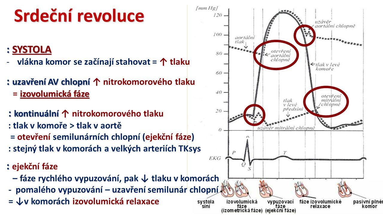 Srdeční revoluce : SYSTOLA -vlákna komor se začínají stahovat = ↑ tlaku : uzavření AV chlopní : uzavření AV chlopní ↑ nitrokomorového tlaku izovolumická fáze = izovolumická fáze : kontinuální : kontinuální ↑ nitrokomorového tlaku : tlak v komoře > tlak v aortě = otevření semilunárních chlopní (ejekční fáze) : stejný tlak v komorách a velkých arteriích TKsys : : ejekční fáze – fáze rychlého vypuzování, pak ↓ tlaku v komorách - pomalého vypuzování – uzavření semilunár chlopní = ↓v komorách izovolumická relaxace