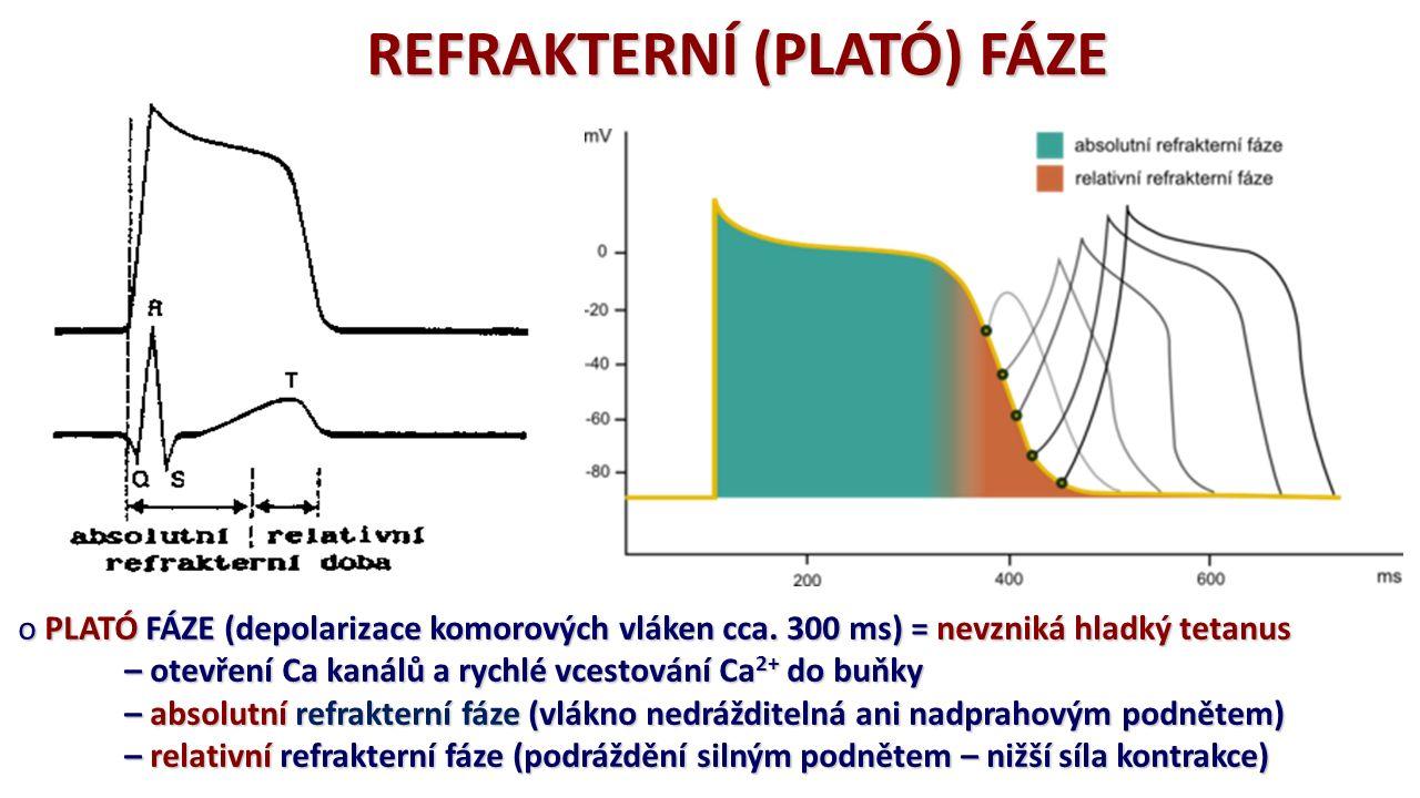 REFRAKTERNÍ (PLATÓ) FÁZE o PLATÓ FÁZE (depolarizace komorových vláken cca. 300 ms) = nevzniká hladký tetanus – otevření Ca kanálů a rychlé vcestování