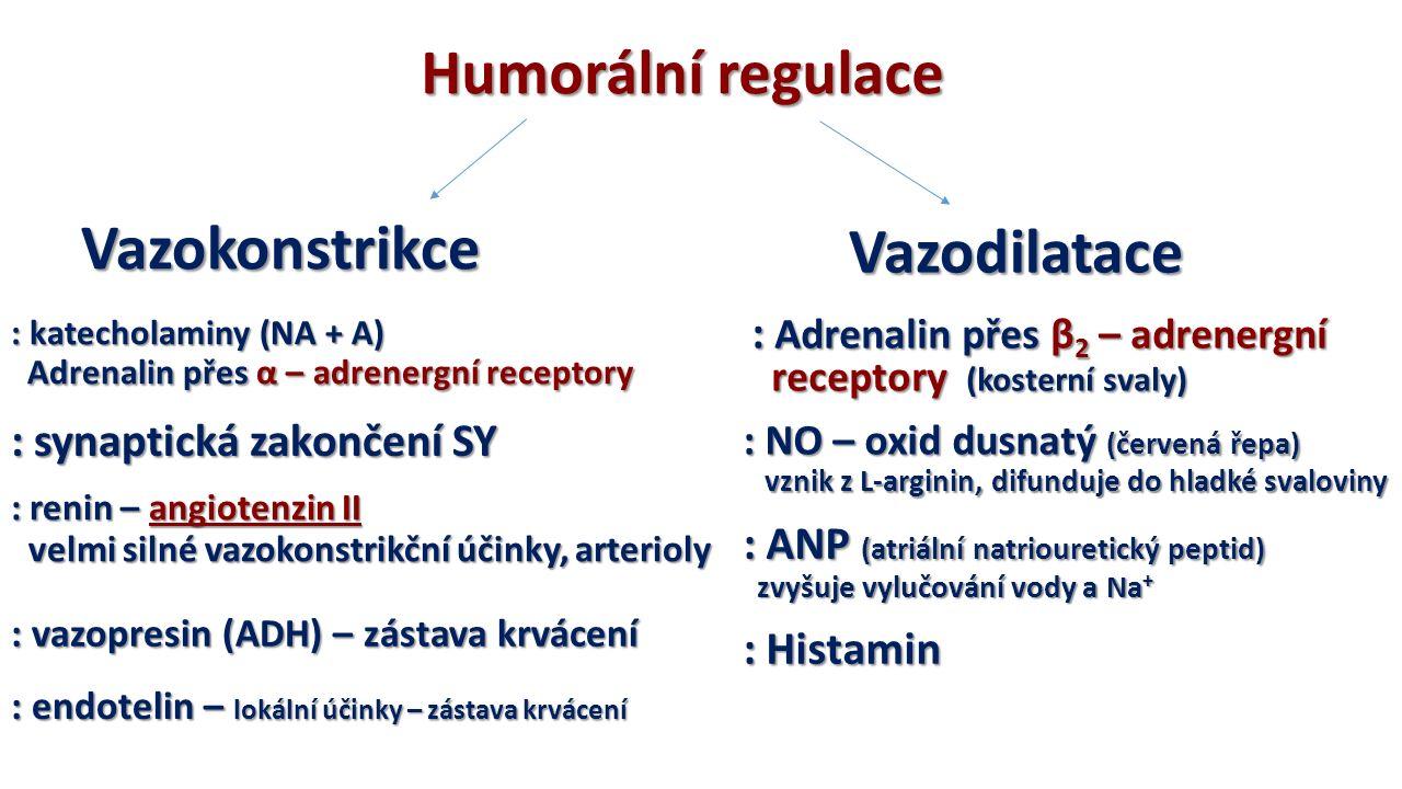 Humorální regulace : katecholaminy (NA + A) Adrenalin přes α – adrenergní receptory Adrenalin přes α – adrenergní receptory : synaptická zakončení SY : renin – angiotenzin II velmi silné vazokonstrikční účinky, arterioly velmi silné vazokonstrikční účinky, arterioly : vazopresin (ADH) – zástava krvácení : endotelin – lokální účinky – zástava krvácení Vazokonstrikce Vazodilatace : Adrenalin přes β 2 – adrenergní receptory (kosterní svaly) receptory (kosterní svaly) : NO – oxid dusnatý (červená řepa) vznik z L-arginin, difunduje do hladké svaloviny vznik z L-arginin, difunduje do hladké svaloviny : ANP (atriální natriouretický peptid) zvyšuje vylučování vody a Na + zvyšuje vylučování vody a Na + : Histamin