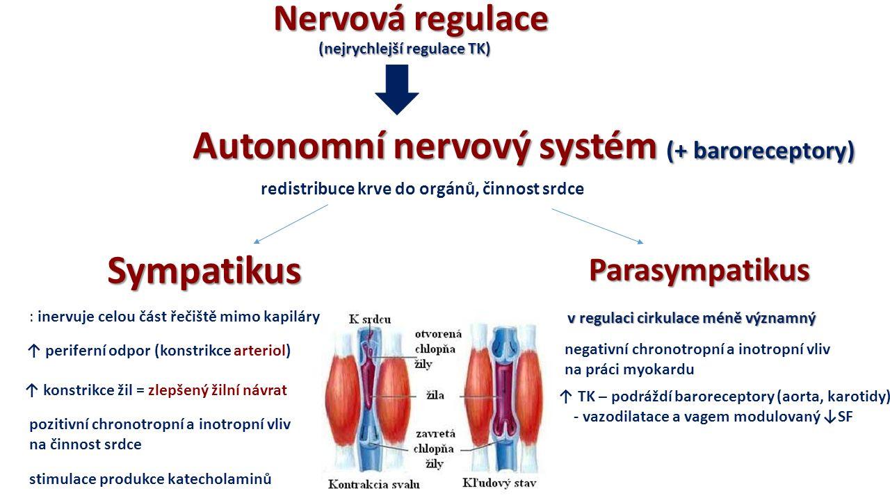 Nervová regulace Nervová regulace (nejrychlejší regulace TK) (nejrychlejší regulace TK) Autonomní nervový systém (+ baroreceptory) redistribuce krve do orgánů, činnost srdce SympatikusParasympatikus : inervuje celou část řečiště mimo kapiláry ↑ periferní odpor (konstrikce arteriol) v regulaci cirkulace méně významný ↑ konstrikce žil = zlepšený žilní návrat pozitivní chronotropní a inotropní vliv na činnost srdce negativní chronotropní a inotropní vliv na práci myokardu stimulace produkce katecholaminů ↑ TK – podráždí baroreceptory (aorta, karotidy) - vazodilatace a vagem modulovaný ↓SF
