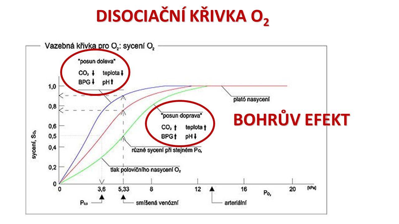 Dechový objem Nádechový rezervní objem Výdechový rezervní objem asi 0,5 l asi 1,5 - 2,5 l asi 1,0 - 2,0 l 3,0 - 5,0 l VITÁLNÍKAPACITA DECHOVÉ OBJEMY