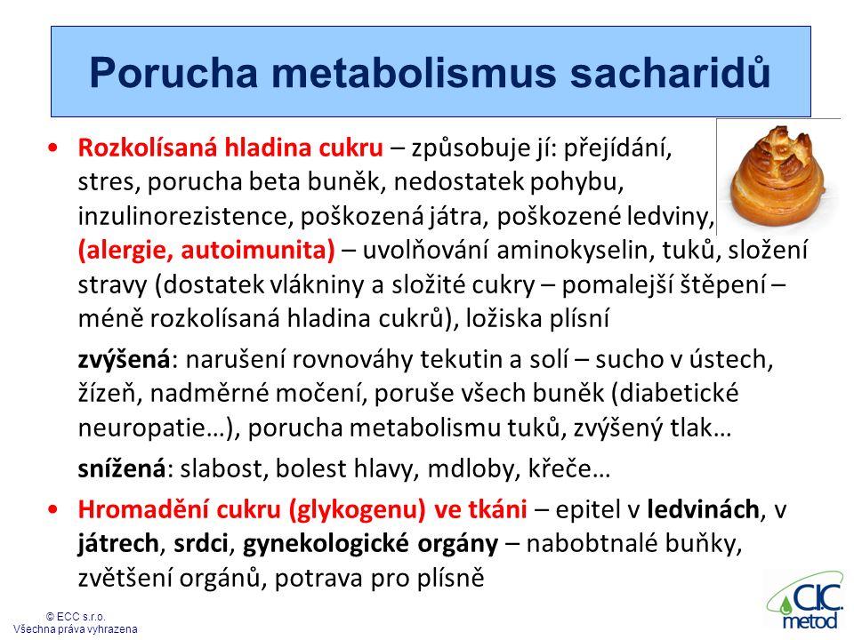 Metabolismus sacharidů VelienDren + Cranium + Antivex – řešíme slezinu (metabolismus, vliv na hormonální žlázy), mozek Liverhelp + Supraren +Hypotal – řešíme řízení metabolismu PankreaDren + Metabol + Enternal– trávení a metabolismus cukrů Zkontrolujeme – emoce- Emoce, Nodegen, plísně (Yeast), boreliová a jiná ložiska střevní sliznici (ColiDren, ColiHelp), štítnou žlázu (ThyreoDren) Místa, kde můžou být cukry uloženy – srdce, ledviny 18 © ECC s.r.o.