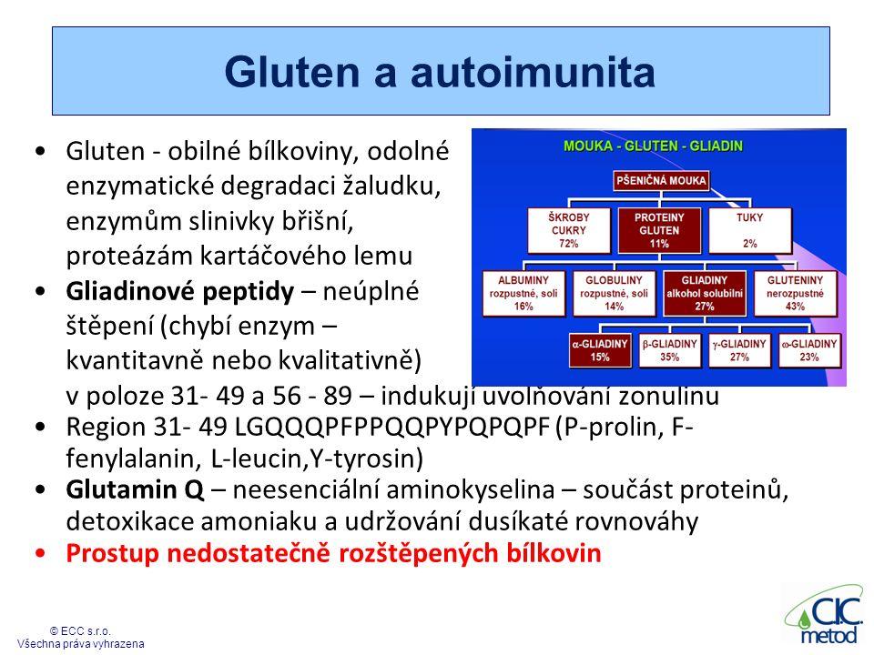 Tkáňová transglutamináza Tkáňová transglutamináza - nitrobuněčný enzym, i v extracelulárním prostoru - spojování bílkovin pomocí ireversibilní vazby - nevratné zřetězení bílkovin - katalyzuje kovalentní vazbu mezi prolinem a glutaminem Reparace a stabilizace tkáně, růst buněk – endotel, fibroblasty, lymfocyty – svalstvo, kůže, vlasy, centrální nervový systém, prostata… Zvýšená exprimace tTg v období vyšších nároků – zánětlivý, metabolický, infekční zátěžový stres, důležitá pro apoptózu Může glutamin v částečně rozštěpené bílkovině změnit na kyselinu glutamovou – modifikovaný gliadin (neoantigen) - Pokud nevzniknou opioidy, tak se zatím nic neděje 33 © ECC s.r.o.