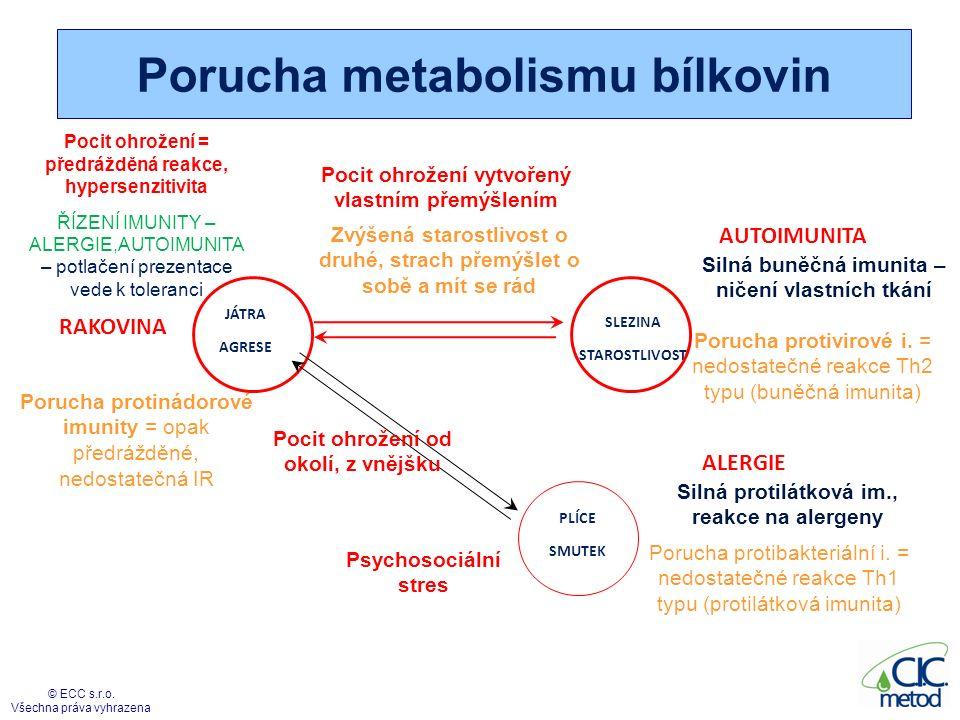 Porucha metabolismu bílkovin 43 © ECC s.r.o. Všechna práva vyhrazena SLEZINA STAROSTLIVOST JÁTRA AGRESE Pocit ohrožení vytvořený vlastním přemýšlením