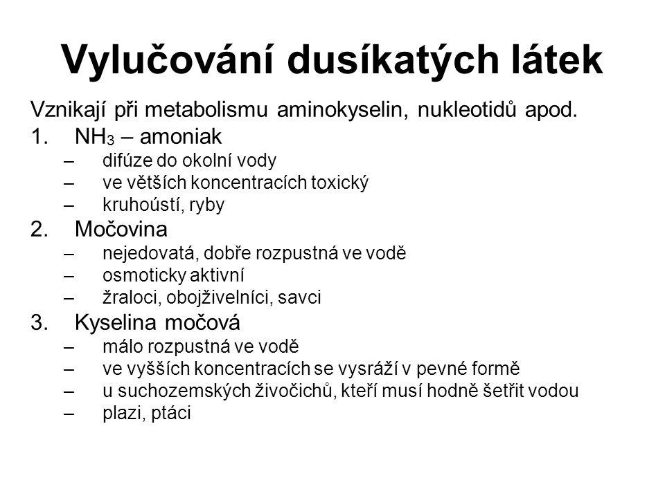 Vylučování dusíkatých látek Vznikají při metabolismu aminokyselin, nukleotidů apod.