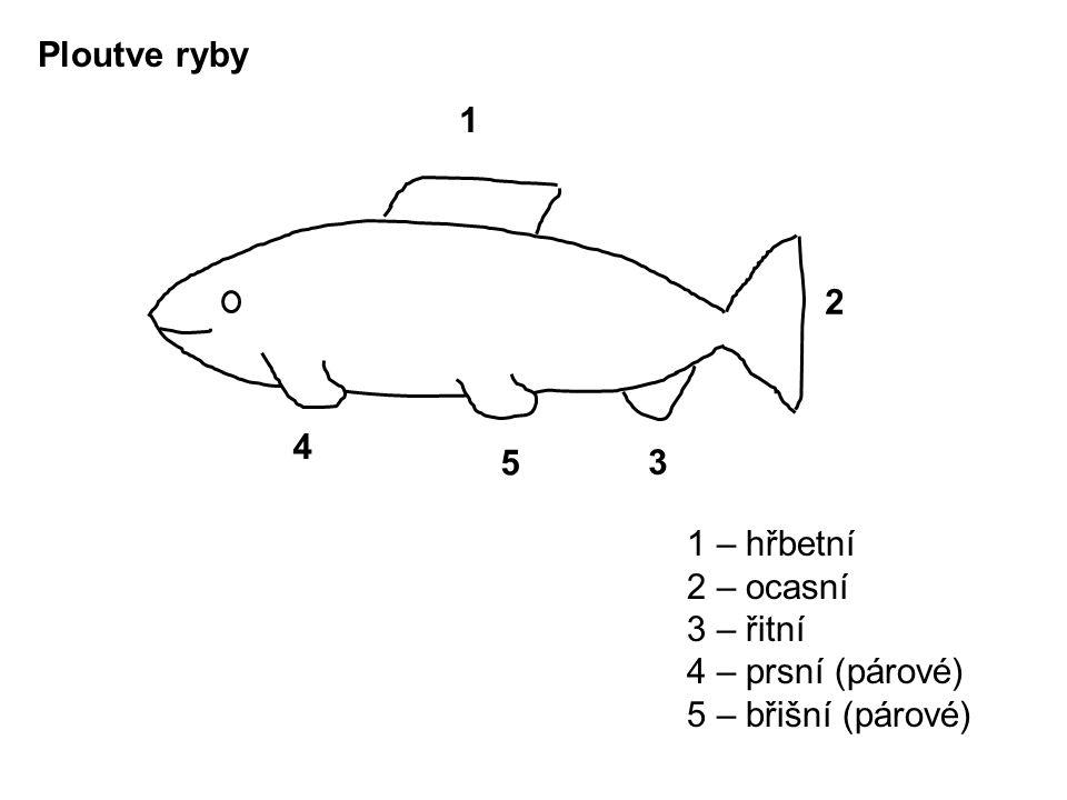 Ploutve ryby 1 – hřbetní 2 – ocasní 3 – řitní 4 – prsní (párové) 5 – břišní (párové) 1 3 4 5 2