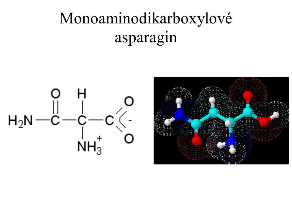 Monoaminodikarboxylové asparagin