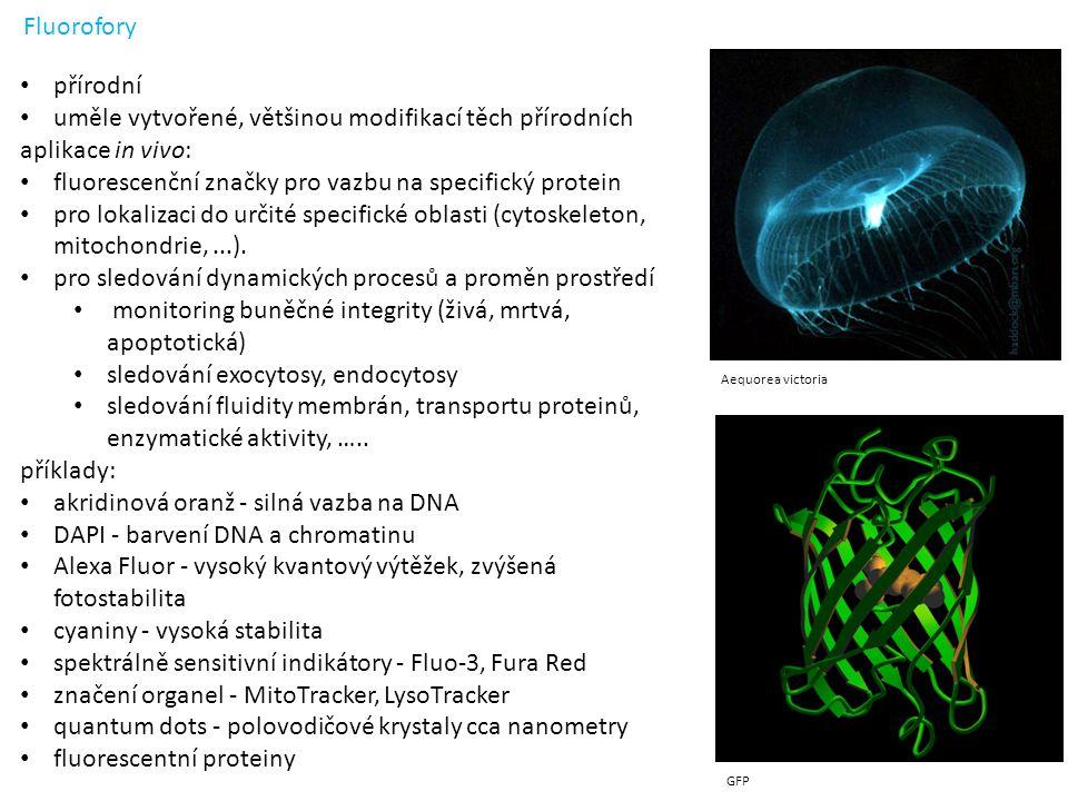 Fluorofory Aequorea victoria GFP přírodní uměle vytvořené, většinou modifikací těch přírodních aplikace in vivo: fluorescenční značky pro vazbu na specifický protein pro lokalizaci do určité specifické oblasti (cytoskeleton, mitochondrie,...).