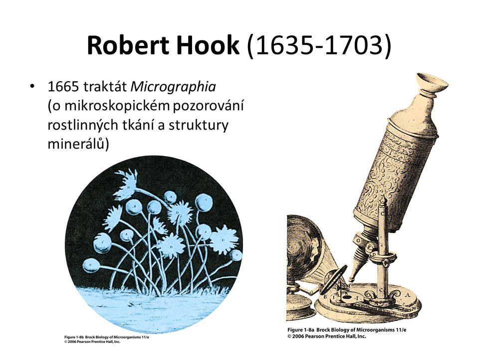 Robert Hook (1635-1703) 1665 traktát Micrographia (o mikroskopickém pozorování rostlinných tkání a struktury minerálů)