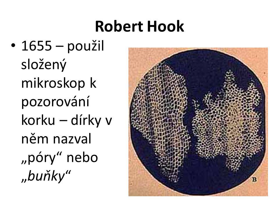 """Robert Hook 1655 – použil složený mikroskop k pozorování korku – dírky v něm nazval """"póry nebo """"buňky"""